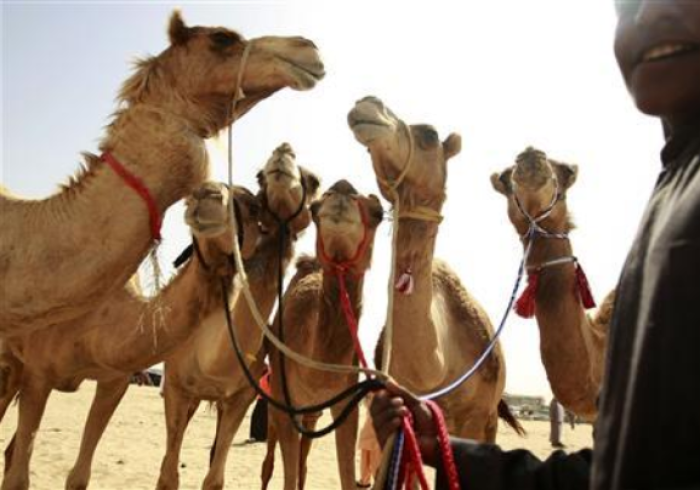 Camels In Genesis Prove Old Testament Is Very Accurate